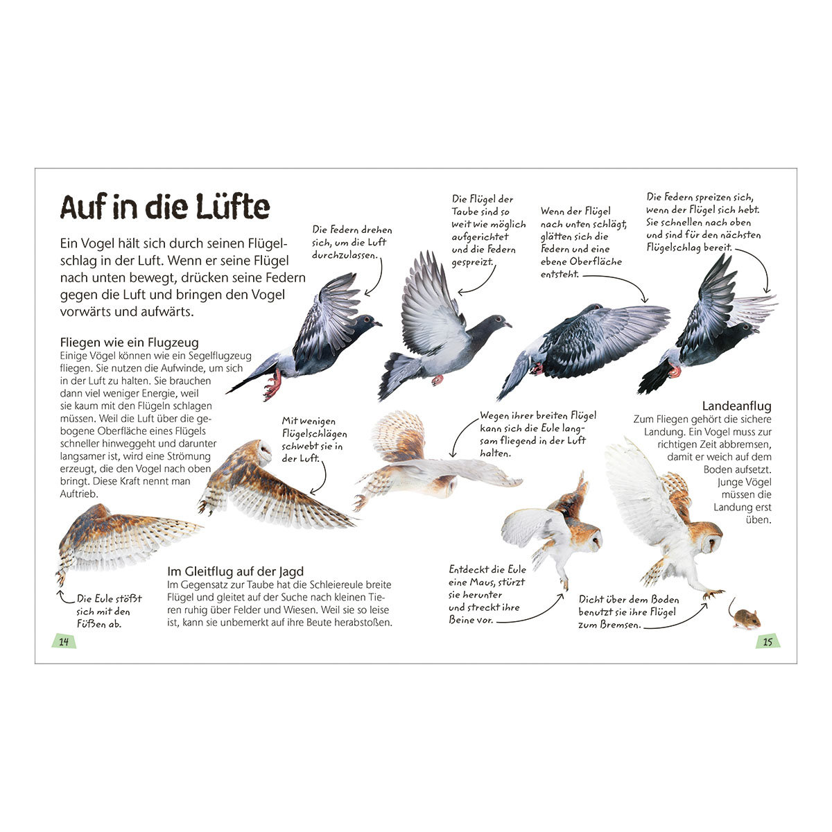 Naturführer für Kinder - Vögel | #4