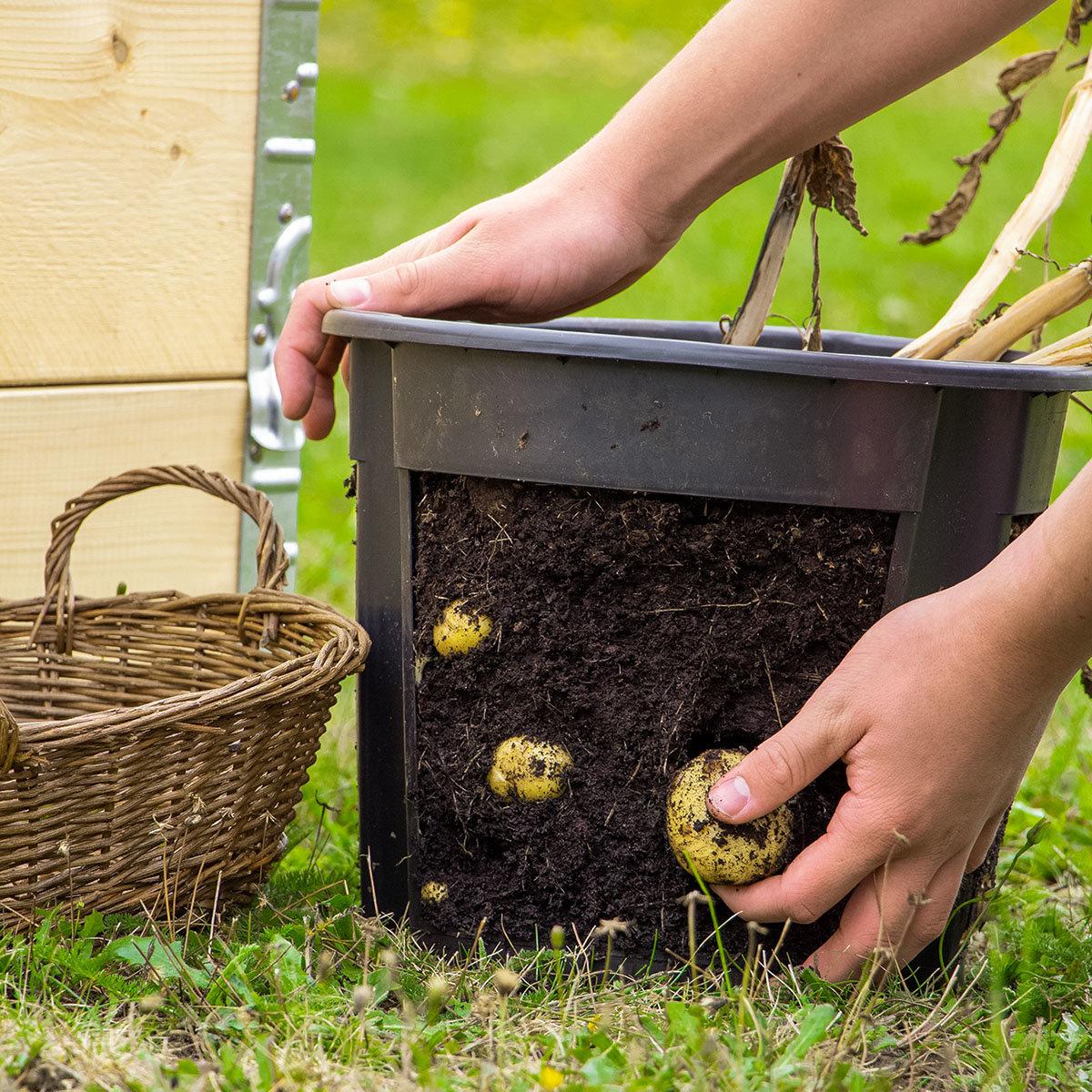 Bio Kartoffelerde, 50 Liter | #4