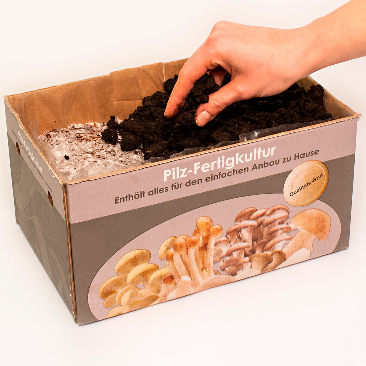 Pilzkultur-Set Weißer Champignon | #4