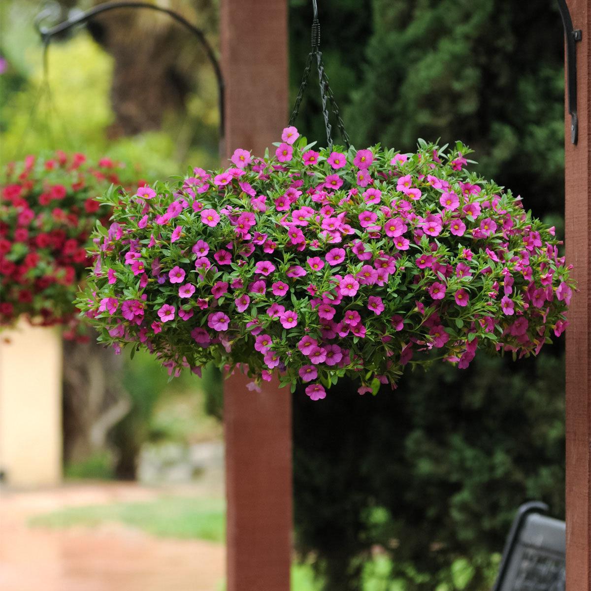 Calibrachoa-Petuniensamen Kabloom Deep Pink F1, Pillensaat | #5