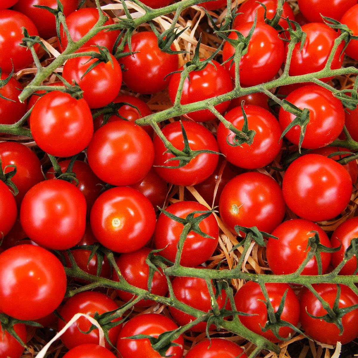 Tomatenpflanze Solena Sweet Red, veredelt, im ca. 12 cm-Topf | #5