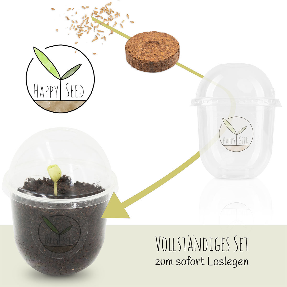 Bonsai Starter Kit Australischen Kiefer Grow2Go   #5