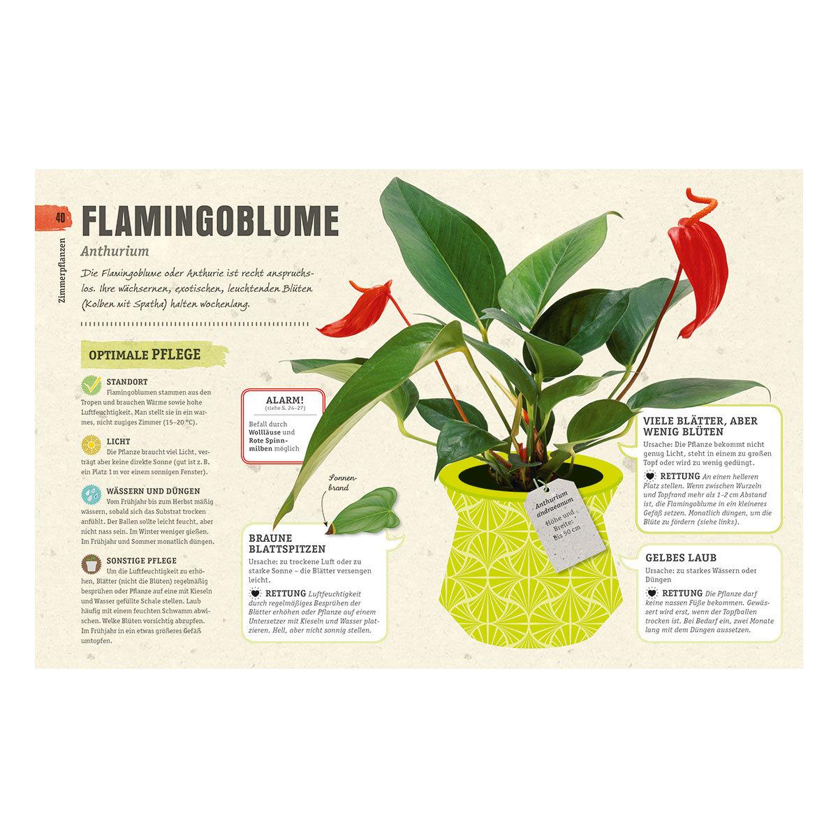 So überleben Zimmerpflanzen garantiert   #5