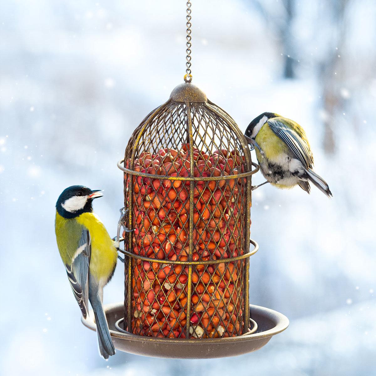 Rote Futter-Erdnüsse für Wildvögel, 750 g | #5
