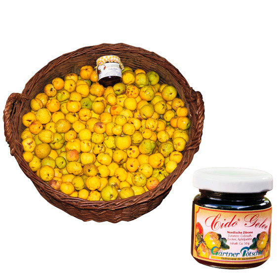 Vitamin-Strauch Cido | #5