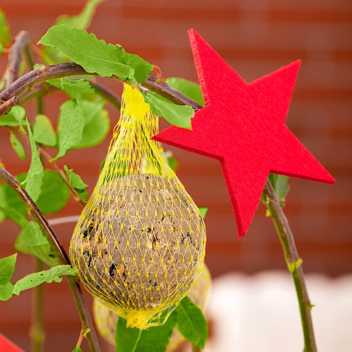 Vogelfutterbaum, im ca. 23 cm-Topf | #6
