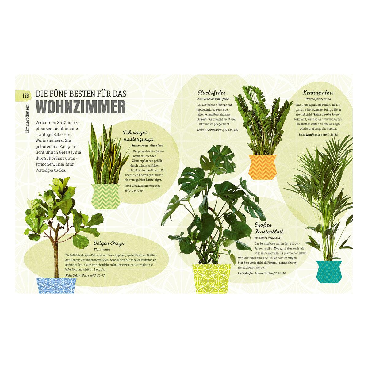 So überleben Zimmerpflanzen garantiert   #6