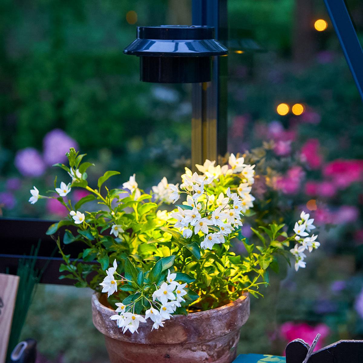 LED-Lampe für Gewächshäuser   #6
