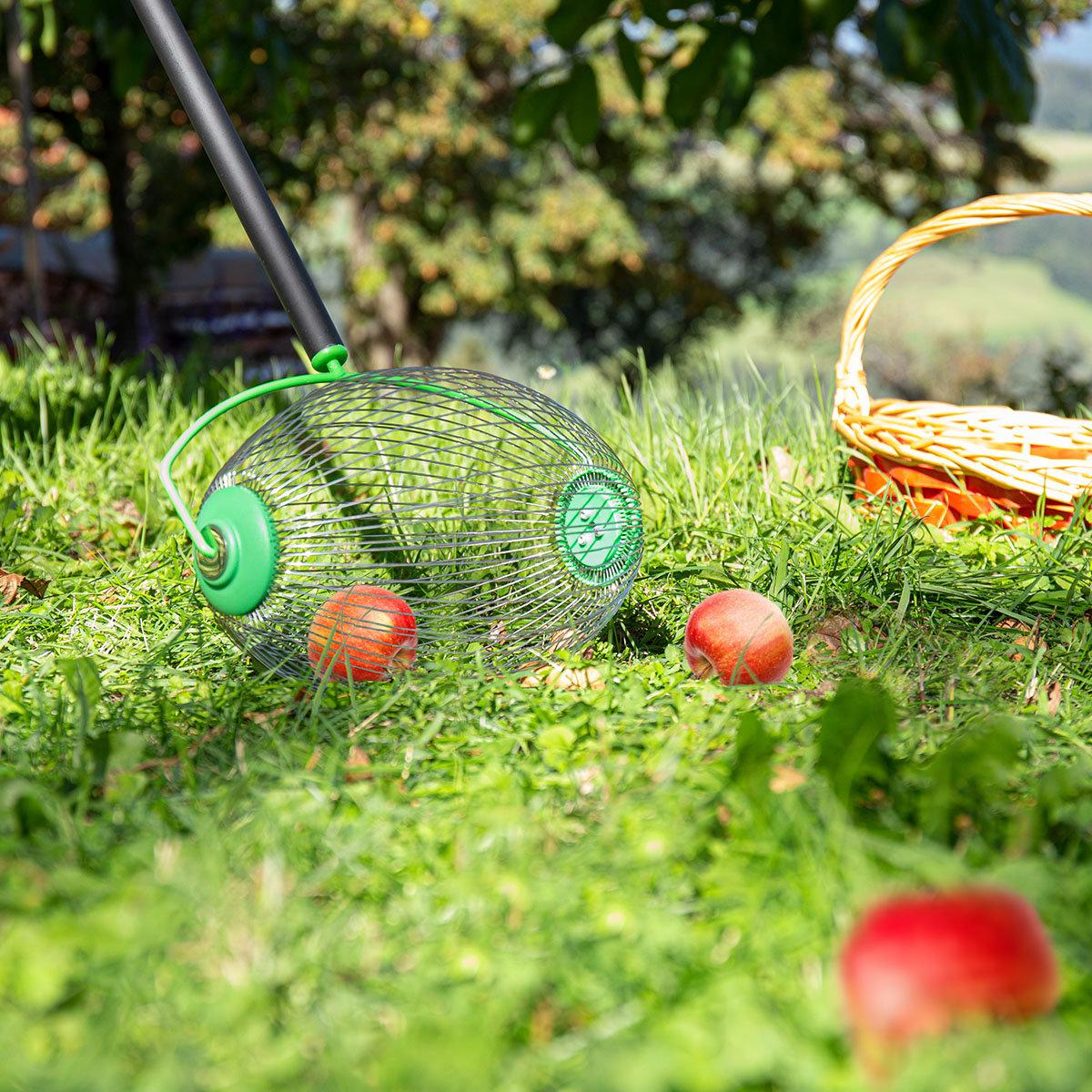 Apfel- und Nuss-Sammler mit Teleskopstiel | #7