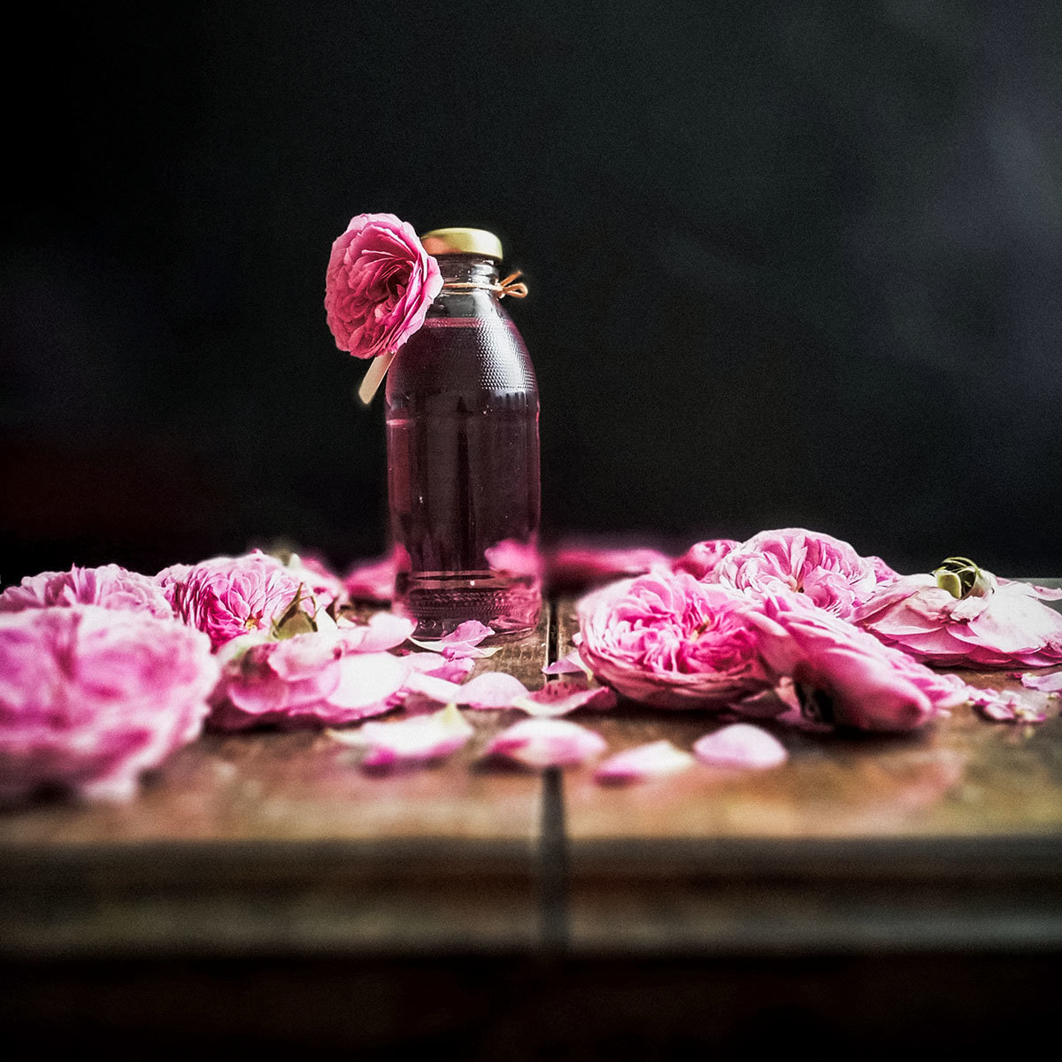 Essbare Culinaric Rose, rosa-apricot, im ca. 22 cm-Topf | #7