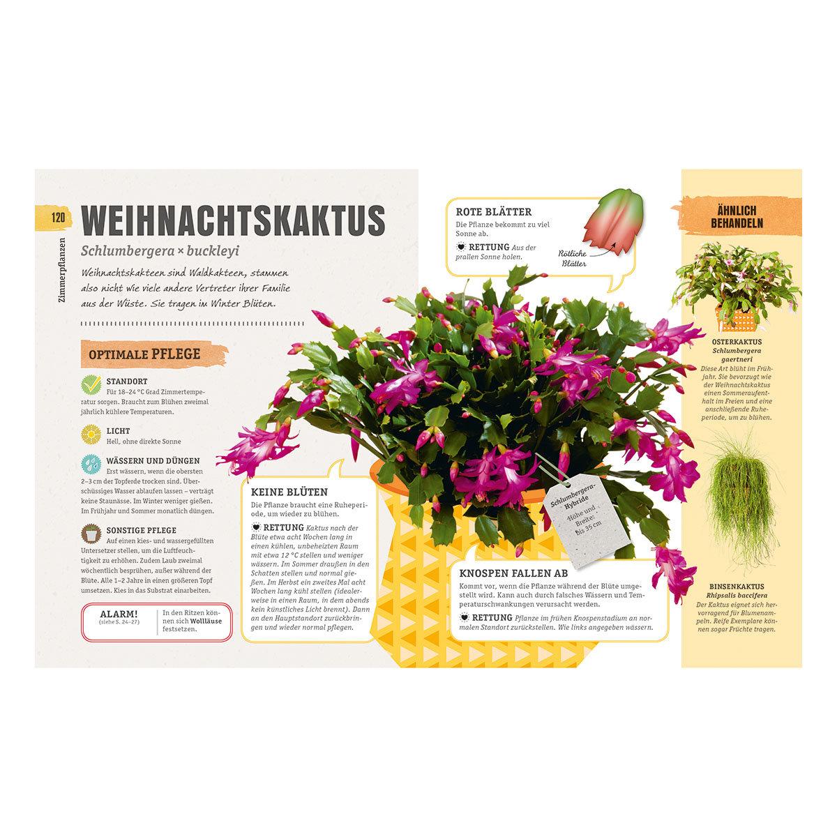 So überleben Zimmerpflanzen garantiert   #7