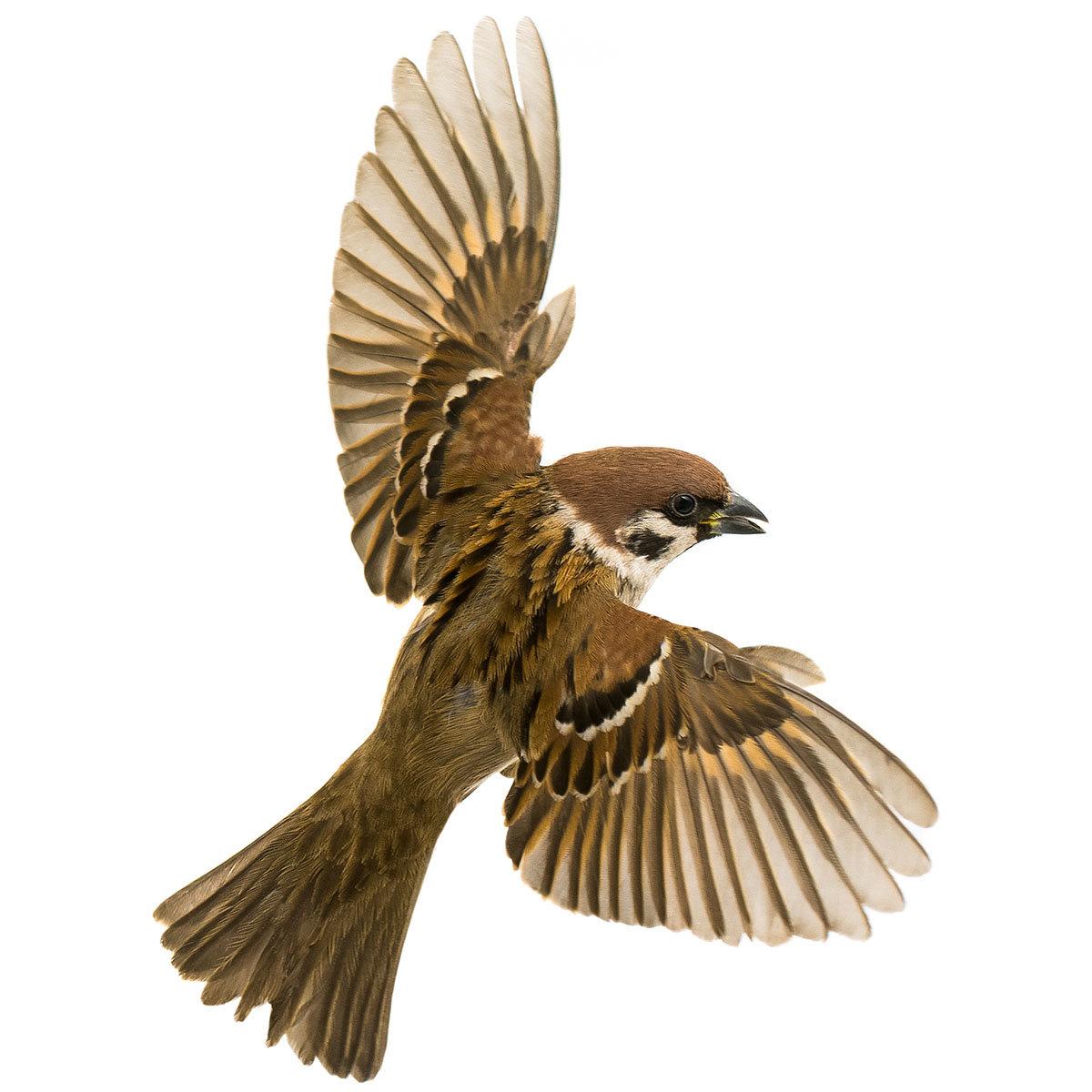 Ganzjahres-Meisenknödel für Wildvögel, ohne Netz, 6 Stück | #7