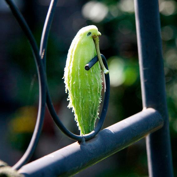 Papageien-Blume | #7