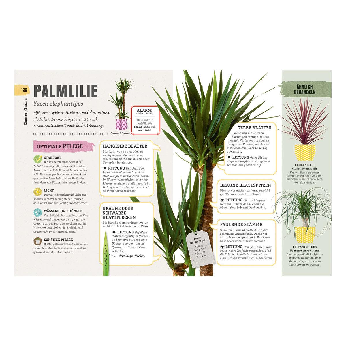 So überleben Zimmerpflanzen garantiert   #8