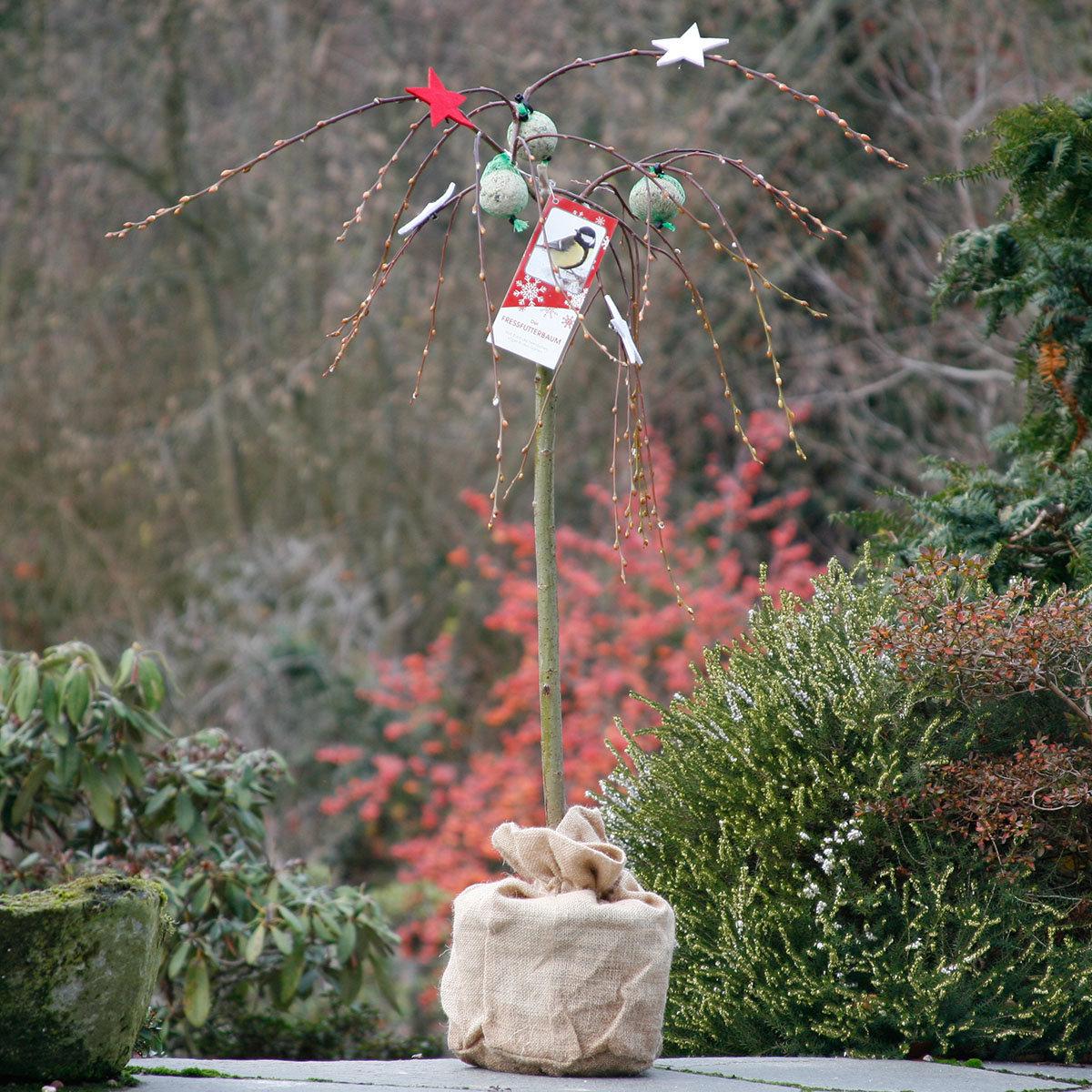 Vogelfutterbaum, im ca. 23 cm-Topf | #9