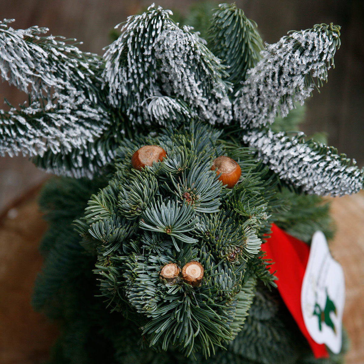 Waldemar der Weihnachtselch | #9