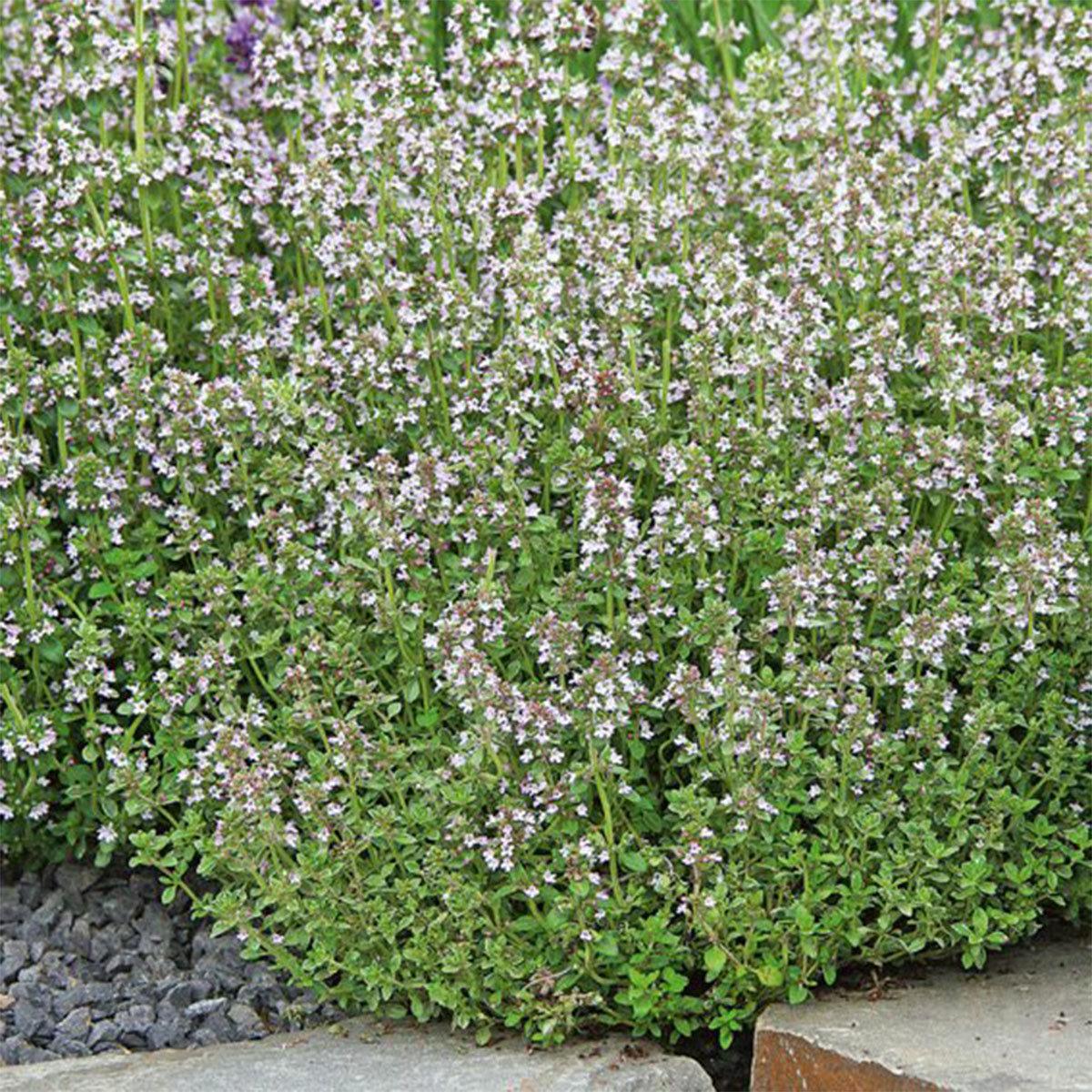Saatgut-Holzbox Bienenparadies, 8 Saatgut-Sorten | #9