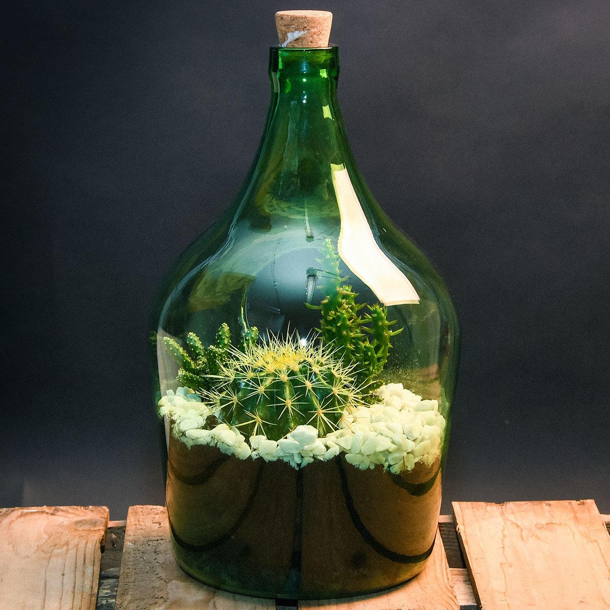 DIY Terrariumflasche mit Seitenöffnung, Komplettset, 3 Liter | #9