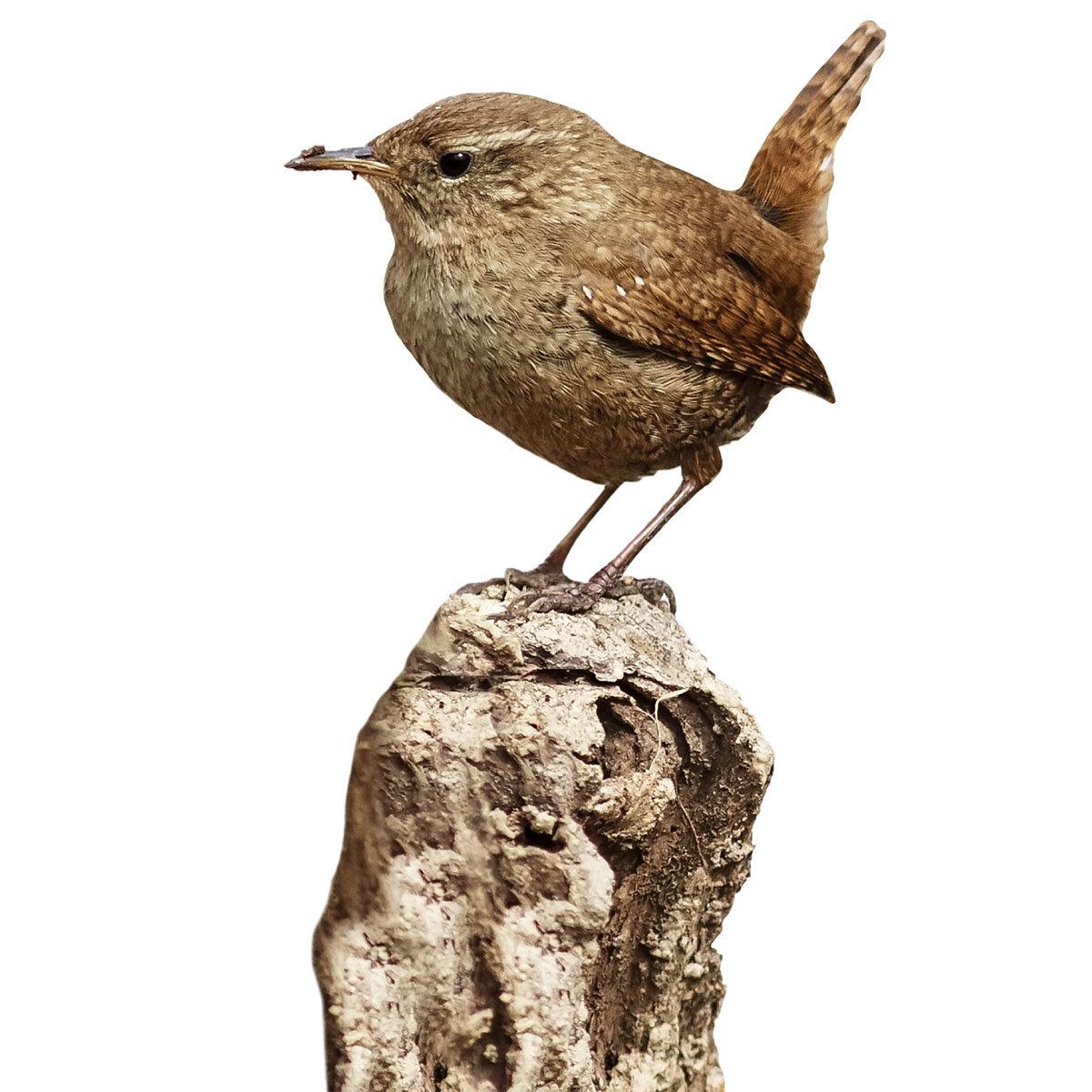 Rote Futter-Erdnüsse für Wildvögel, 750 g | #9
