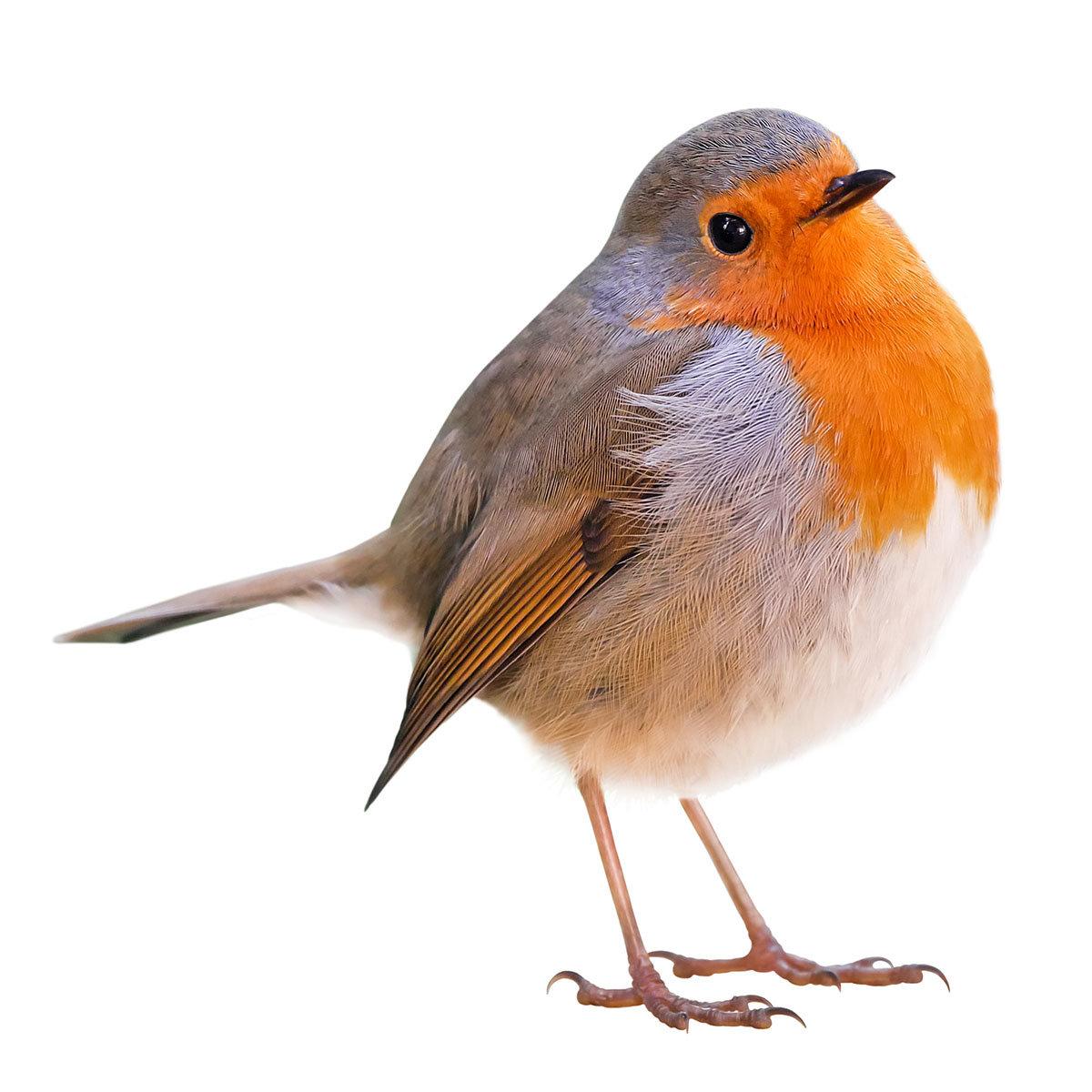 Ganzjahres-Meisenknödel für Wildvögel, ohne Netz, 6 Stück | #9