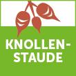 logo-knollenstaude