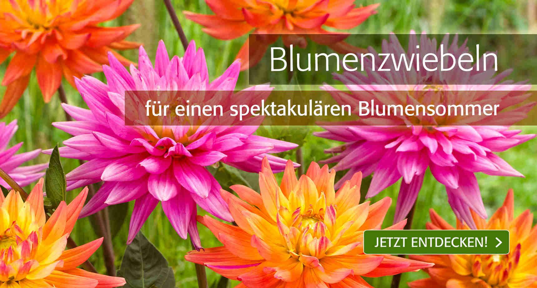 Teaser // 1 // Blumenzwiebeln - 4