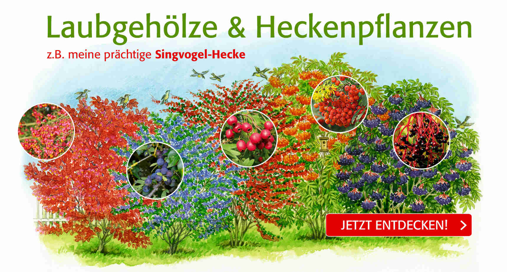 +++ Singvogelhecke +++ - 3