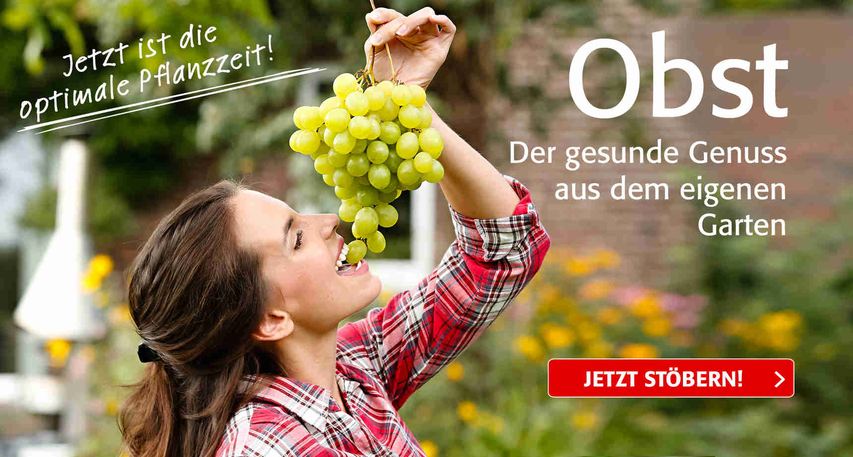 +++ (3) Obst +++ - 3