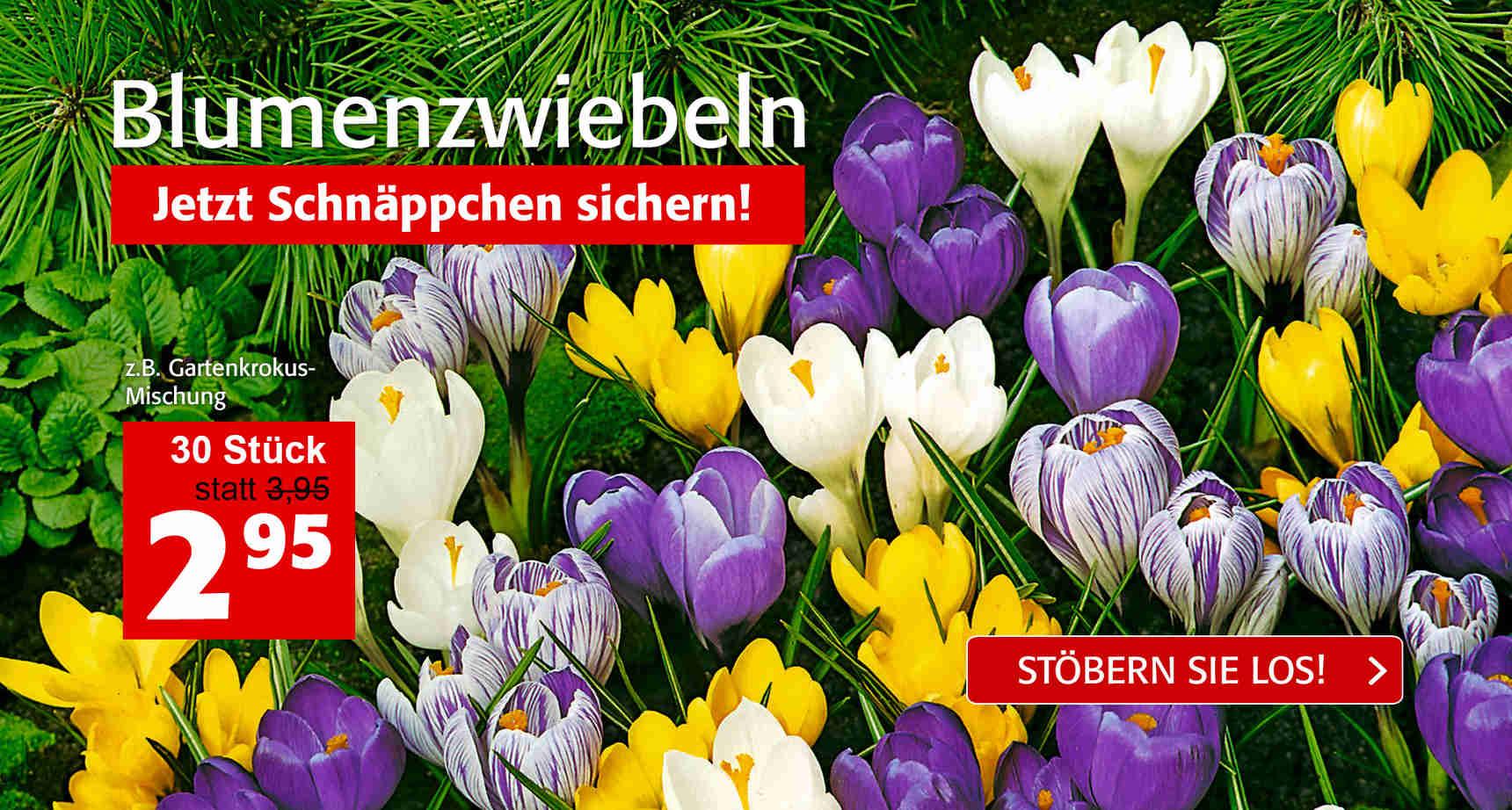 +++ (3) Blumenzwiebeln +++ - 3