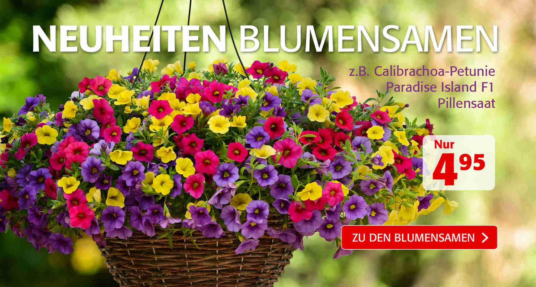 +++ (3) Blumensamen-Neuheiten +++ - 3