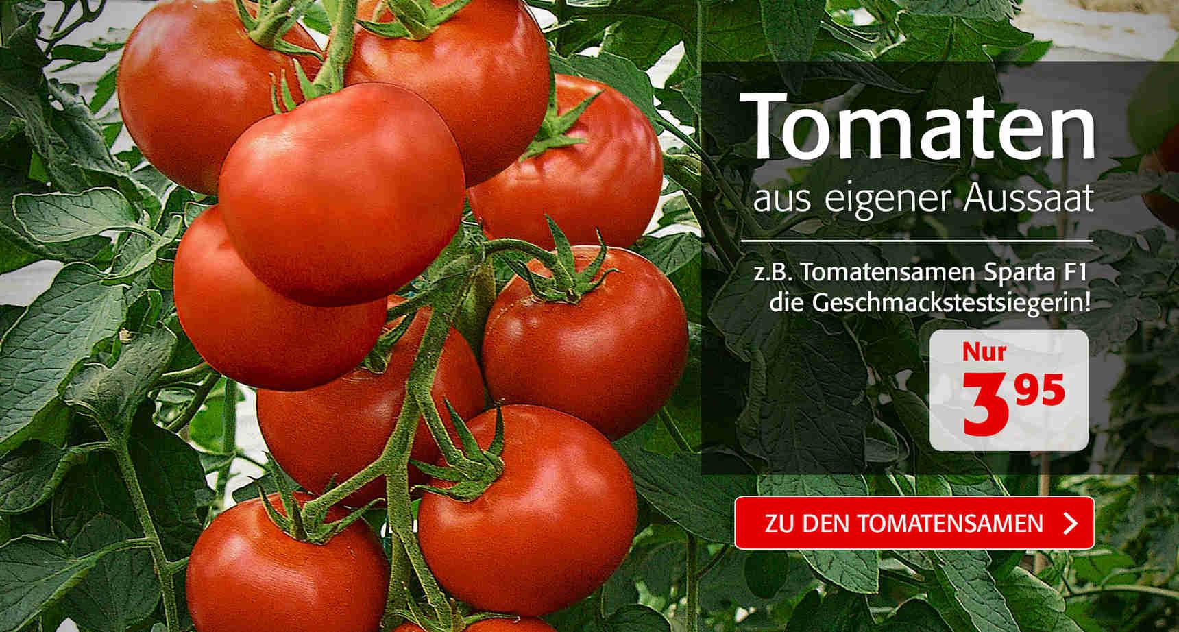 +++ (2) Tomatensamen +++ - 3