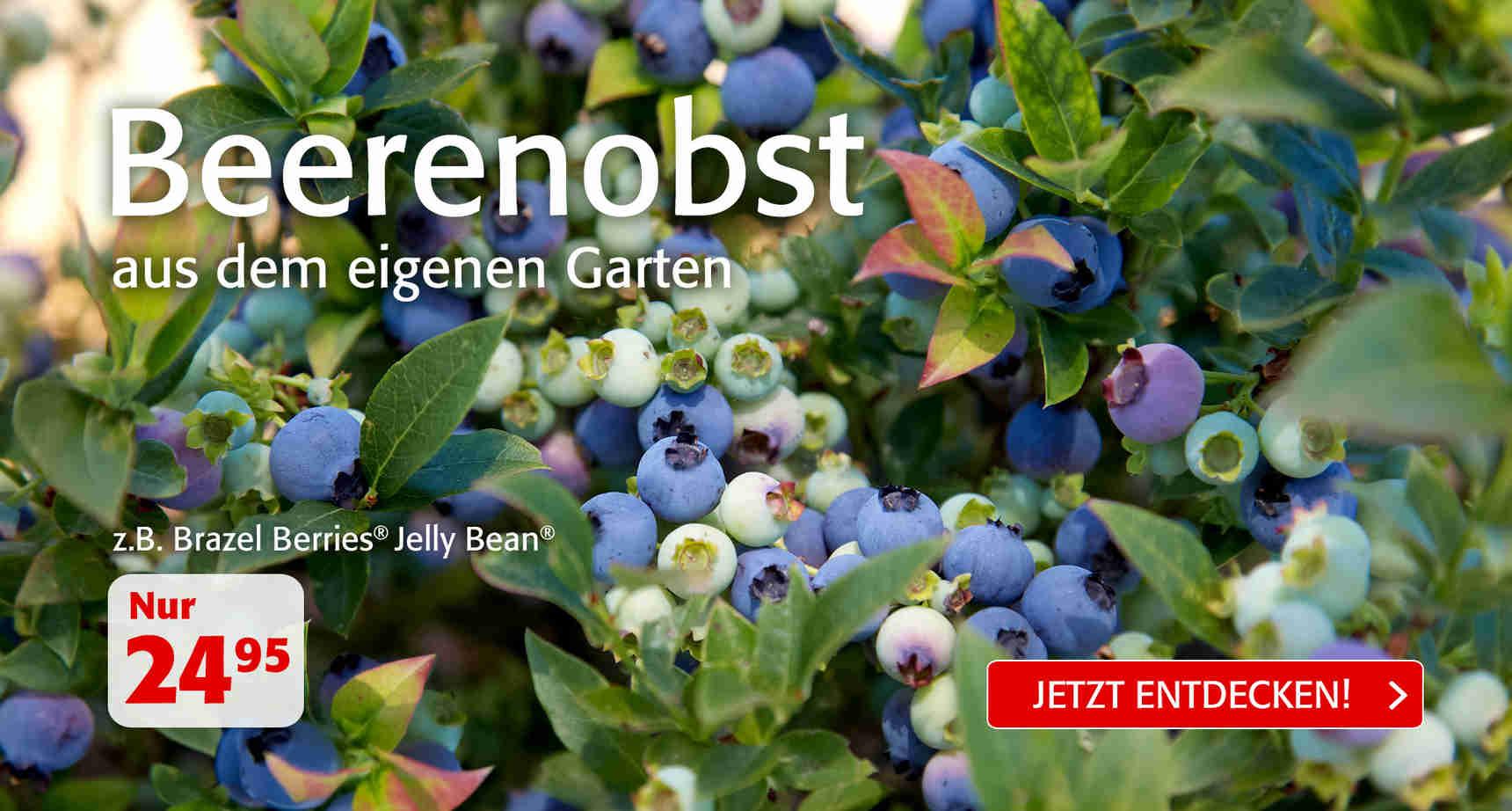 +++ (3) Beerenobst +++ - 3