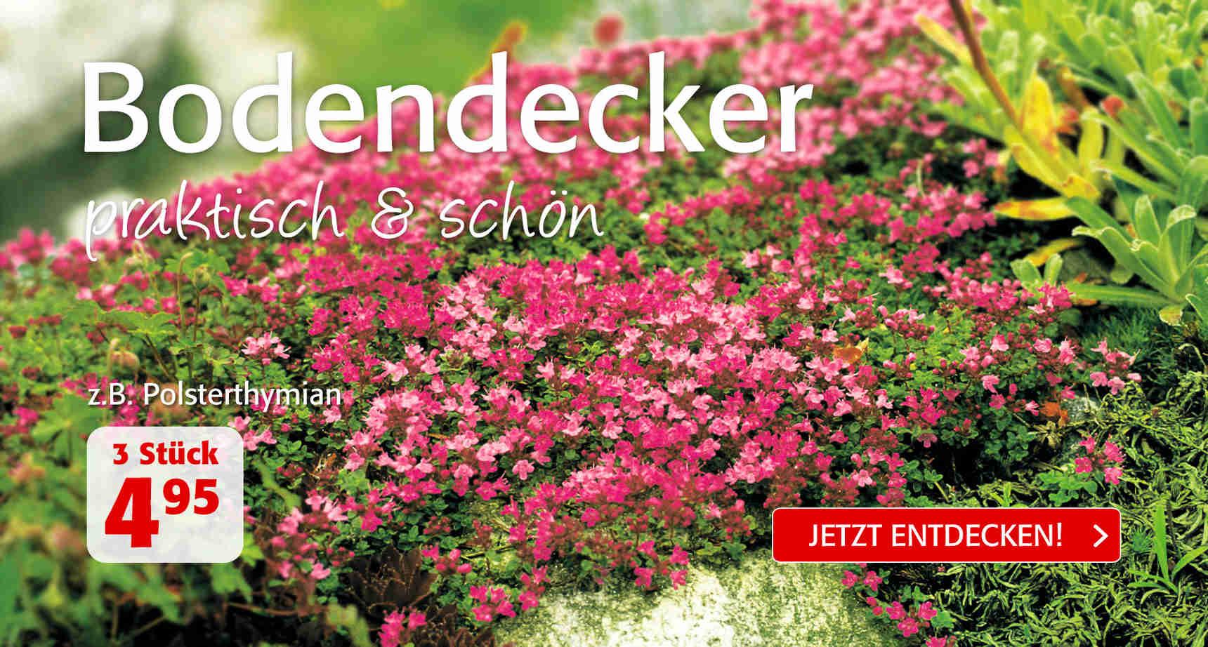 +++ (2) Bodendecker +++ - 3