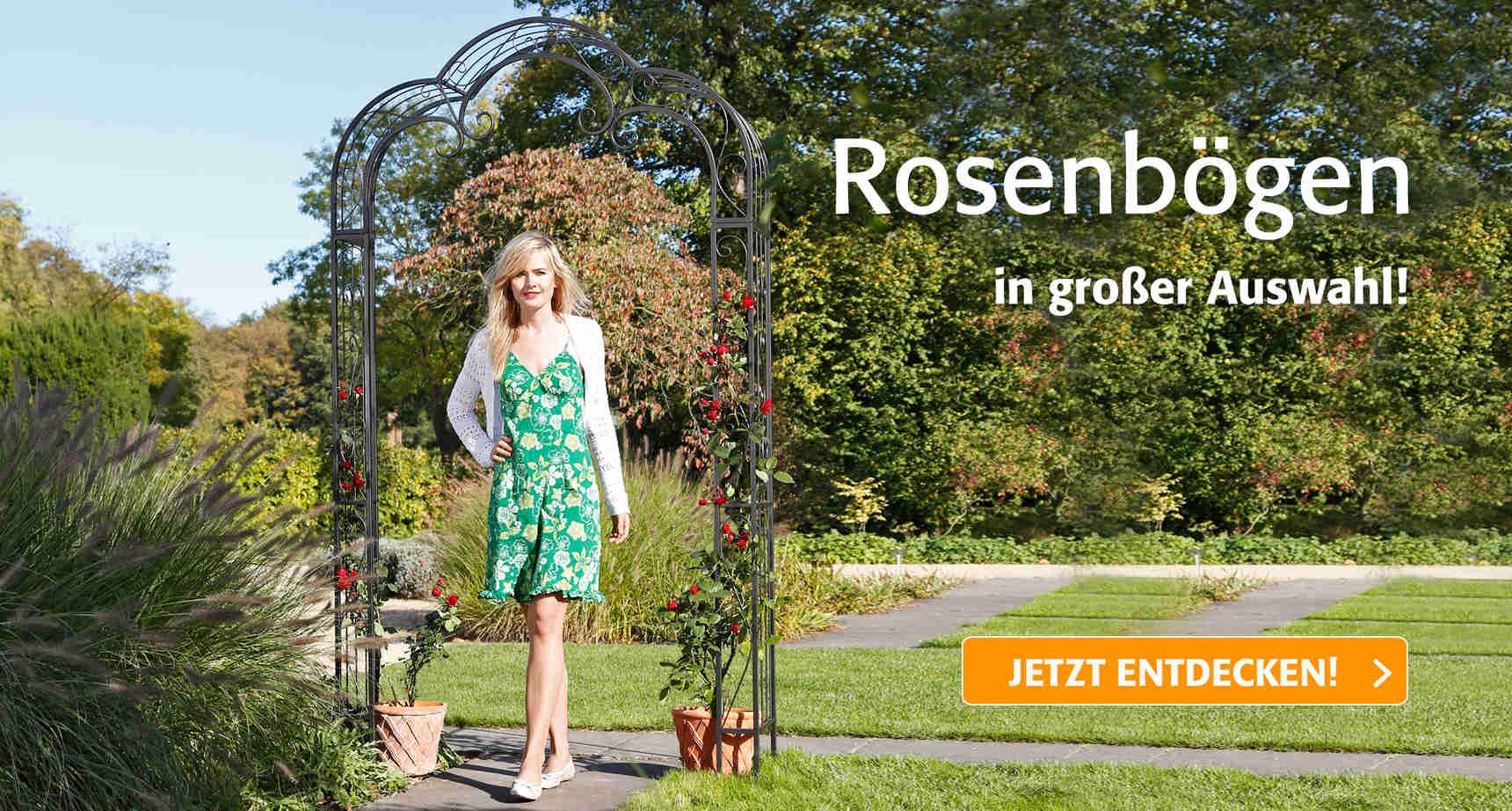 +++ (3) Rosenbögen +++ - 3
