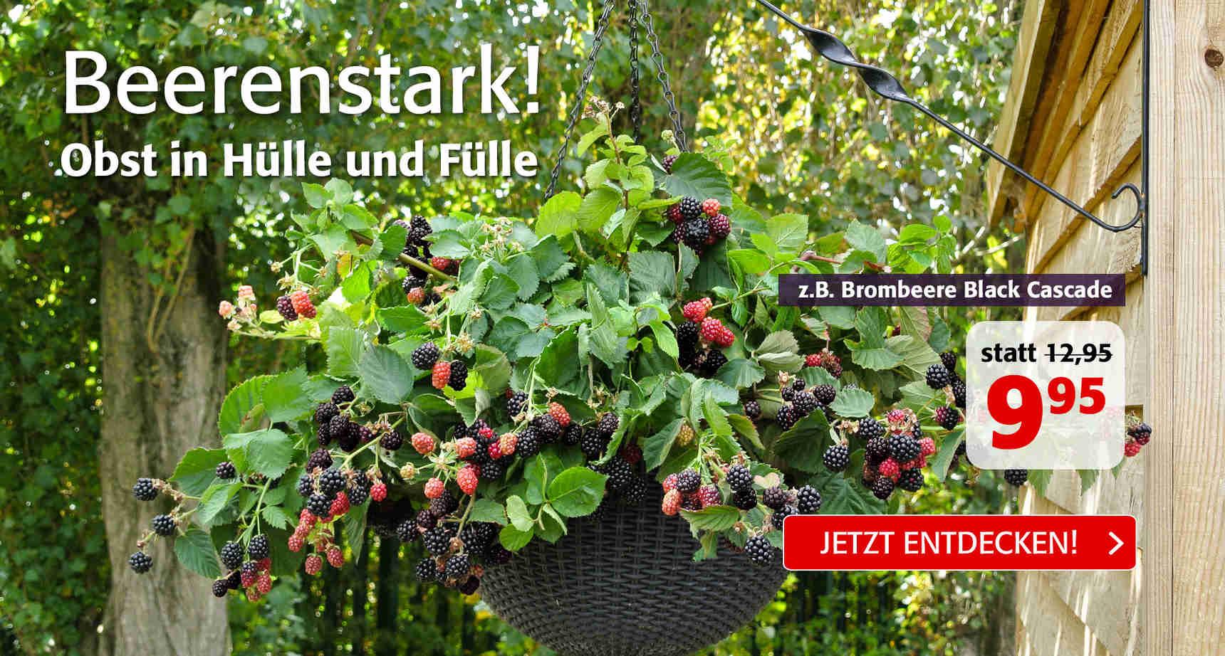+++ (2) Beerenstark +++ - 3
