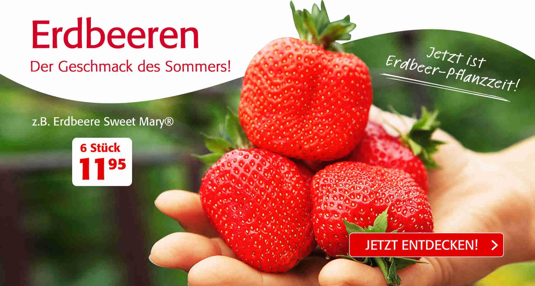 +++ (3) Erdbeeren +++ - 3