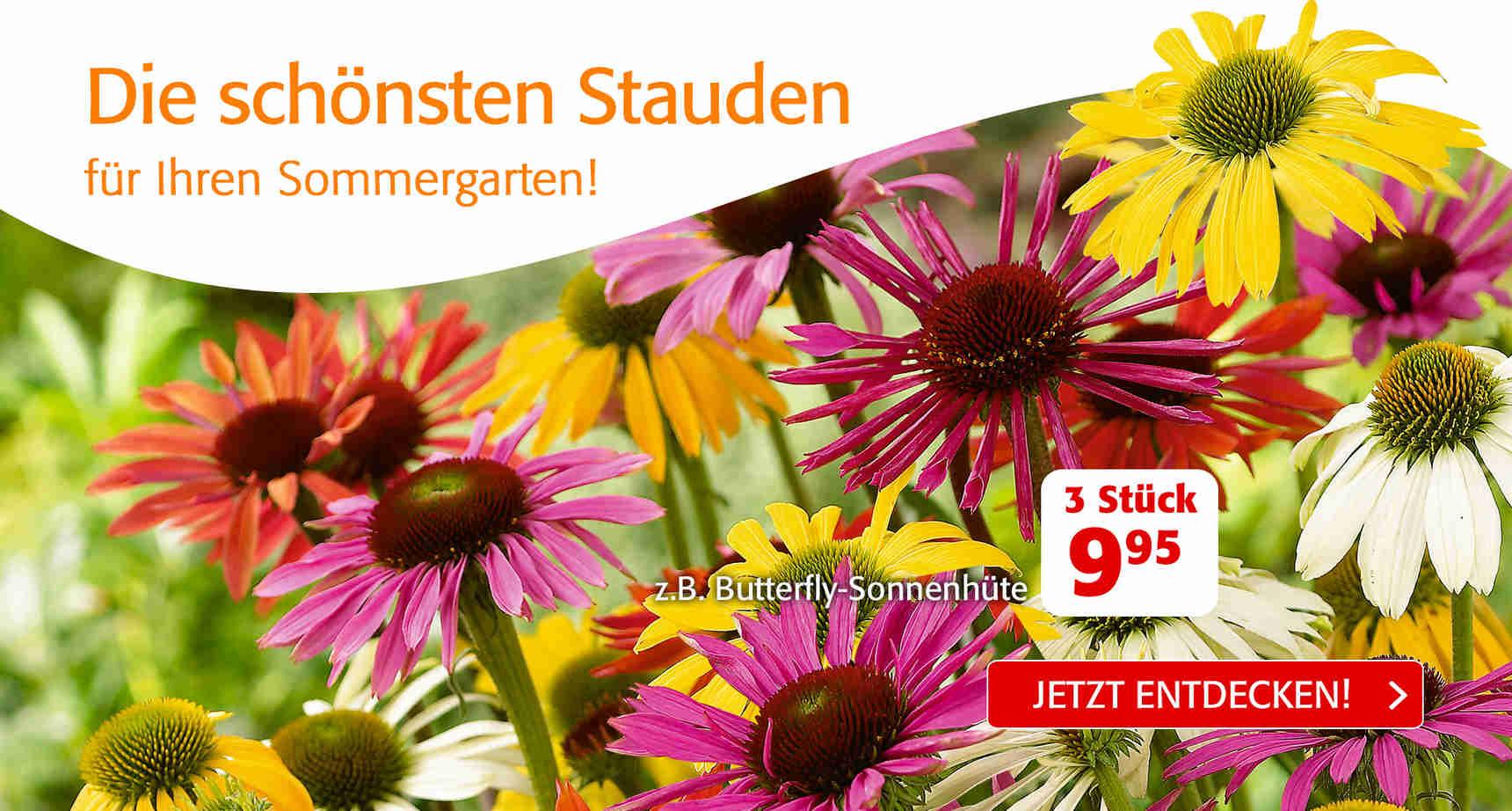 +++ (1) Sommerstauden +++ - 3
