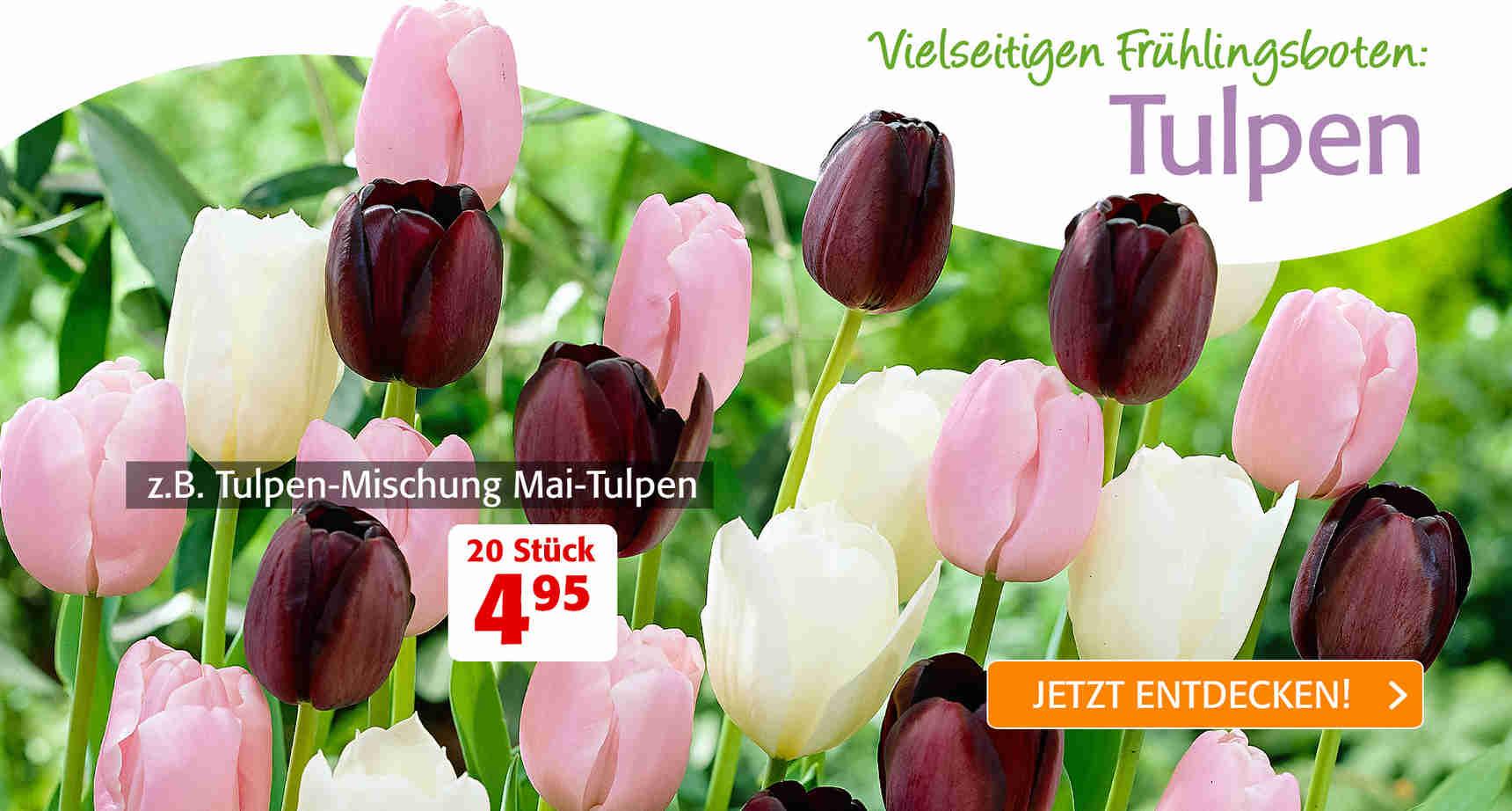 +++ (1) Tulpen +++ - 3