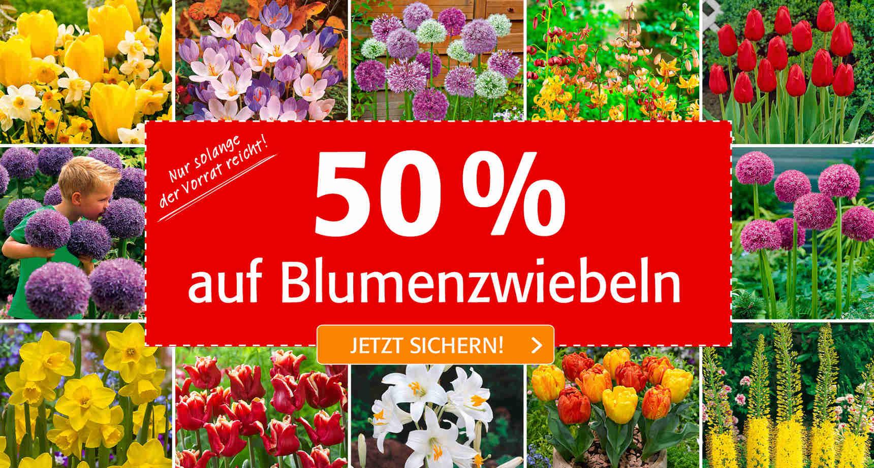 +++ (1) Blumenzwiebeln SALE +++ - 1