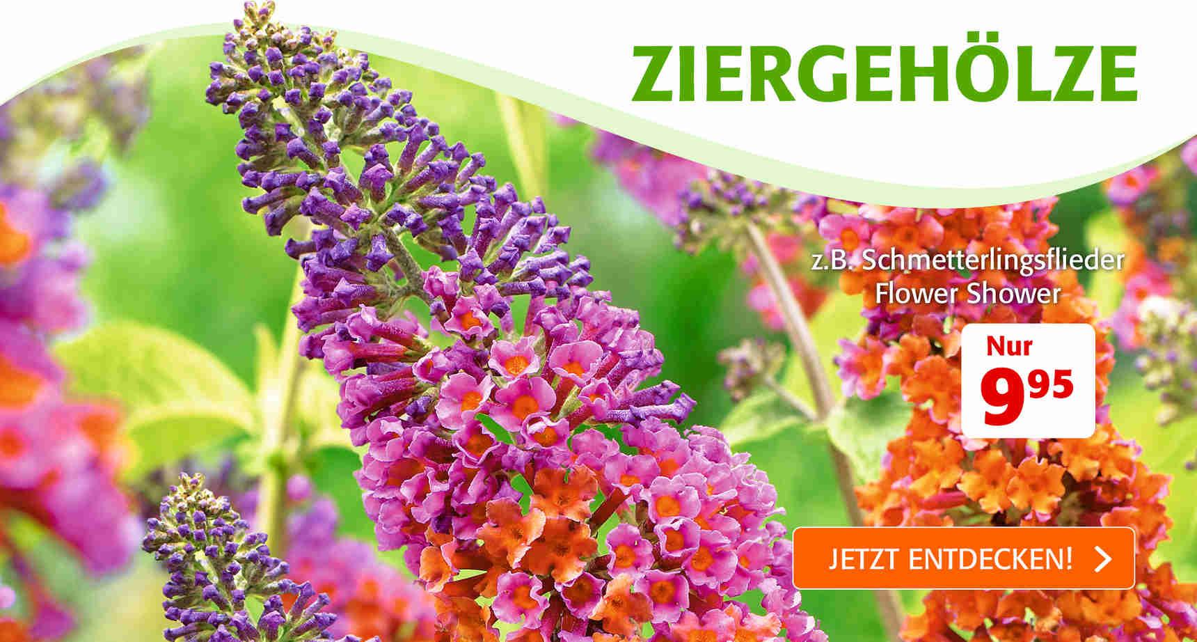 +++ (1) Ziergehoelze +++ - 1