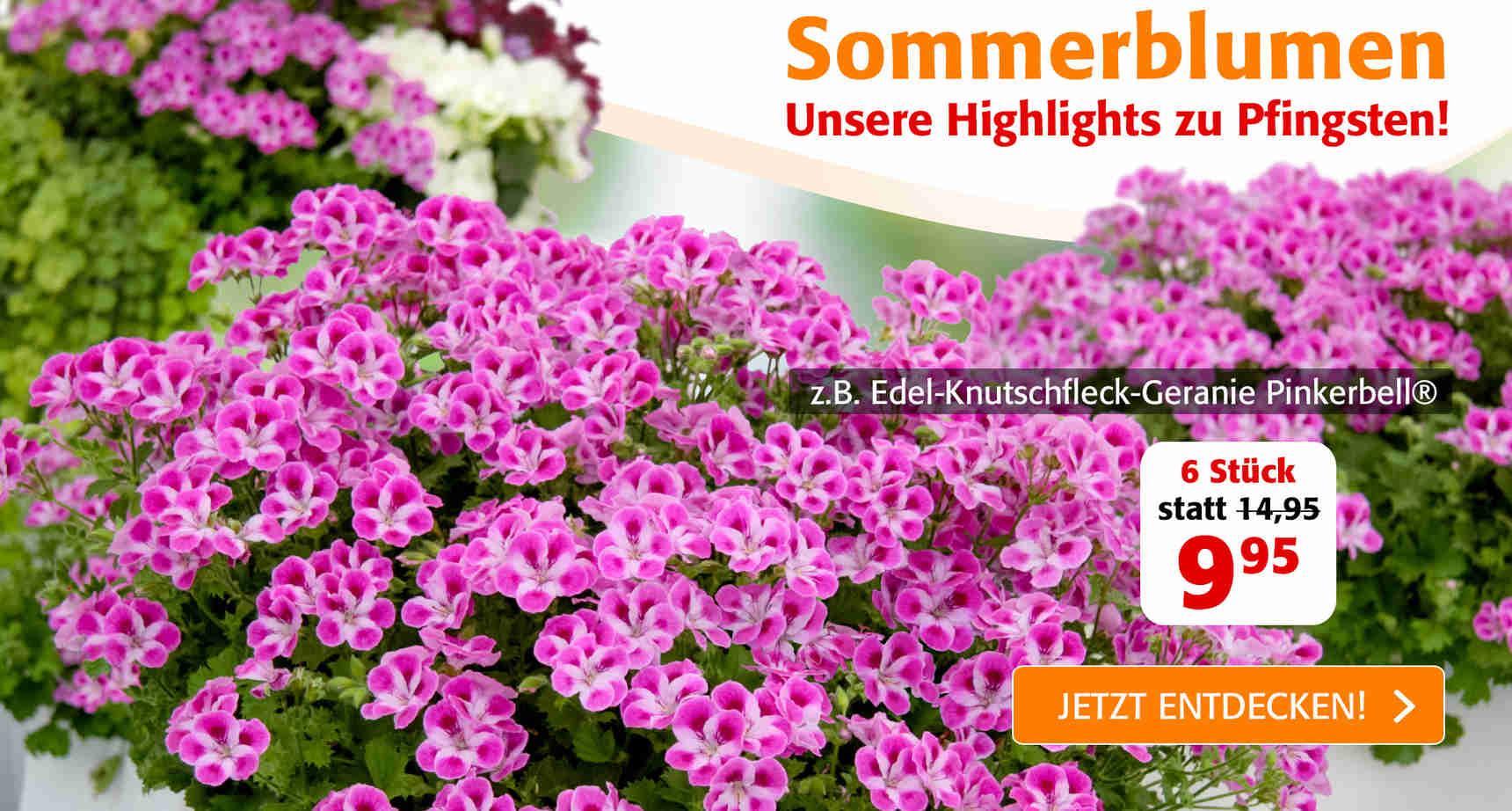 +++ (3) Sommerblumen +++ - 1