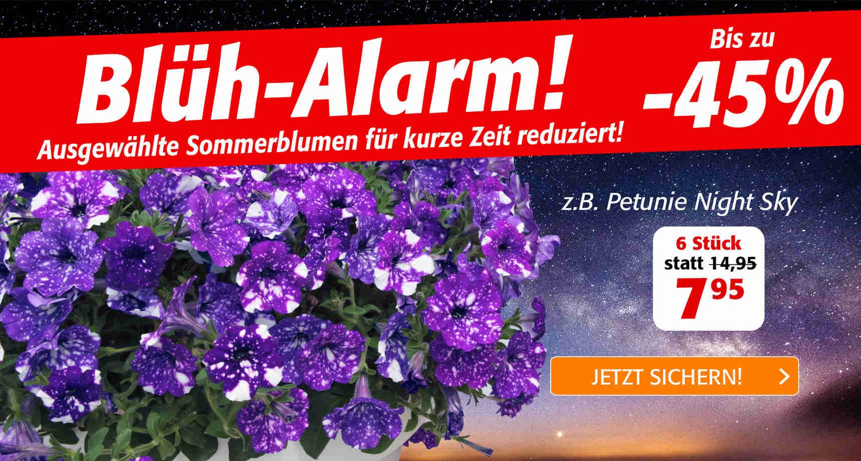 +++ (1) Sommerblumen +++ - 1