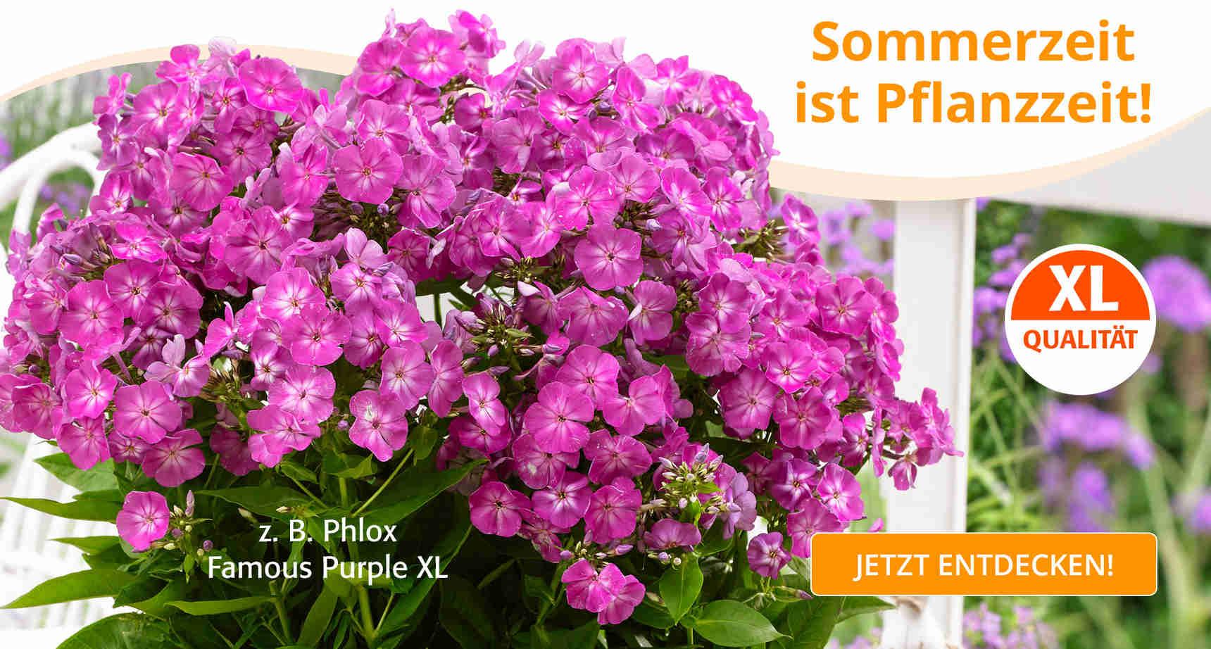 +++ (1) XL-Pflanzen +++ - 1