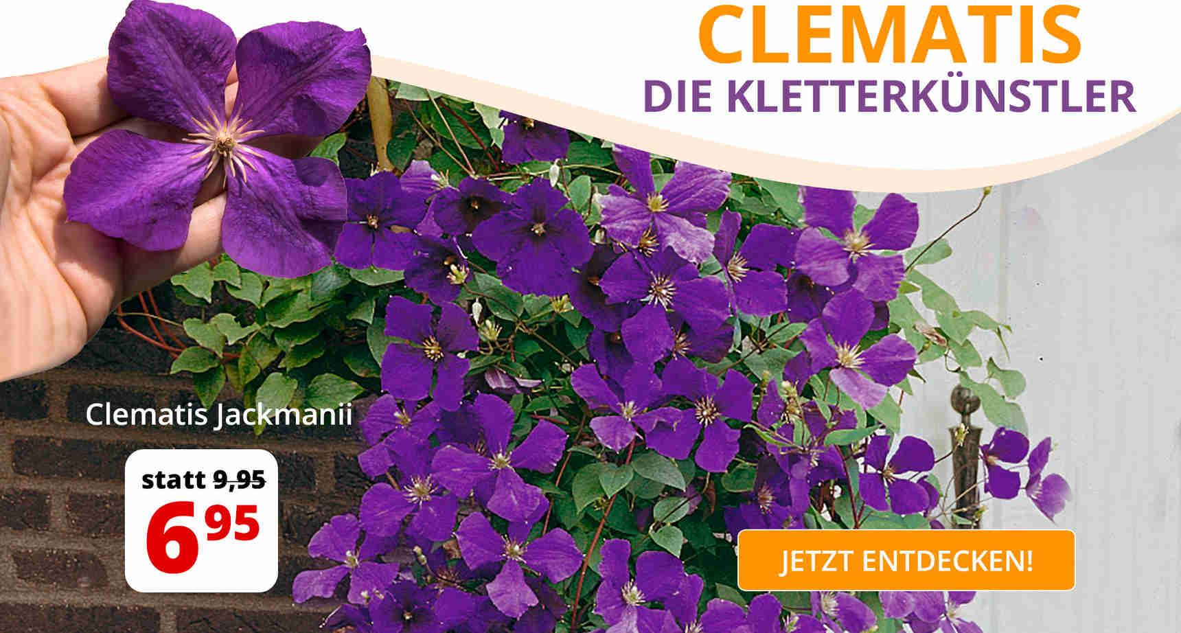 +++ (1) Clematis +++ - 1