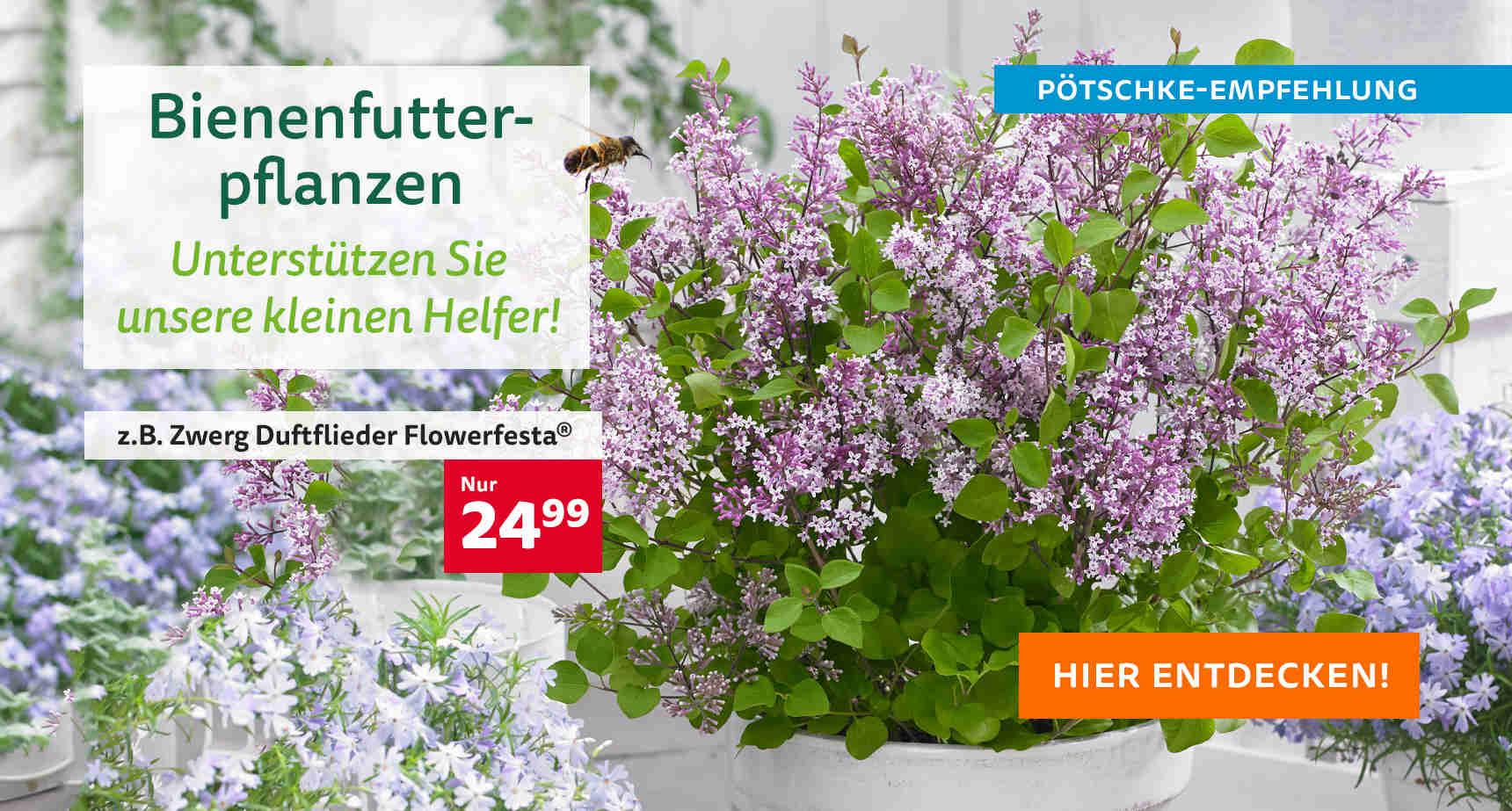 +++ (1) Bienenfutterpflanzen +++ - 3