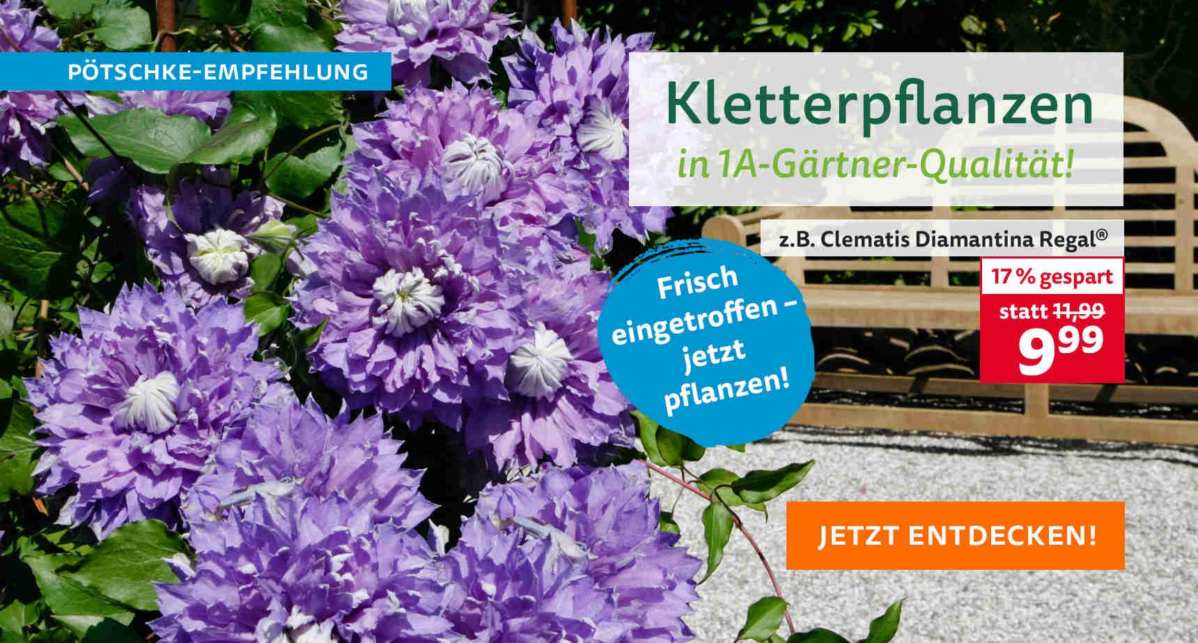 +++ (3) Kletterpflanzen +++ - 3
