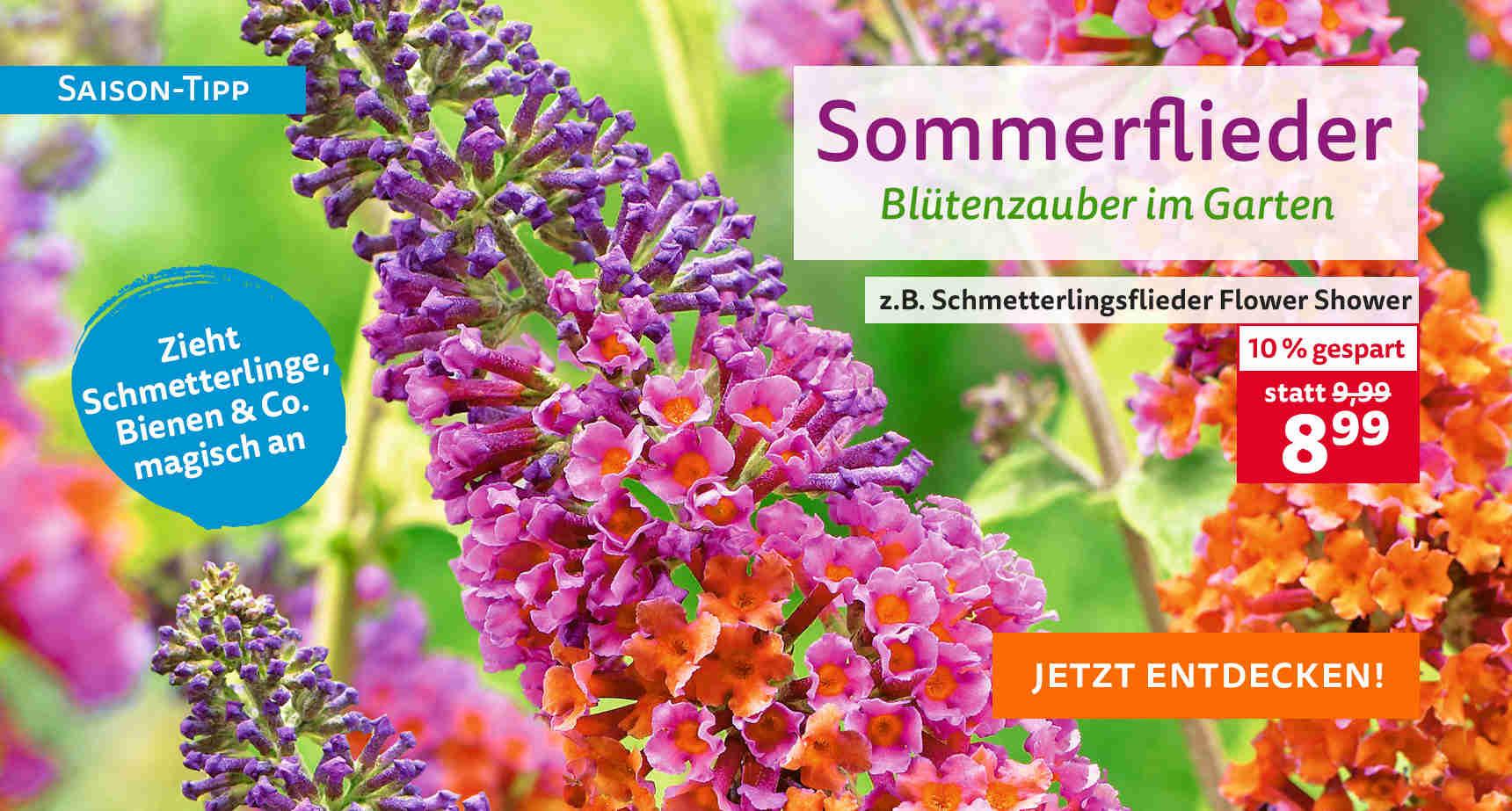 +++ (2) Sommerflieder +++ - 3
