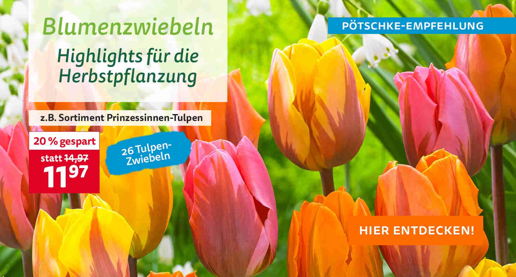 +++ (1) Blumenzwiebeln +++ - 3
