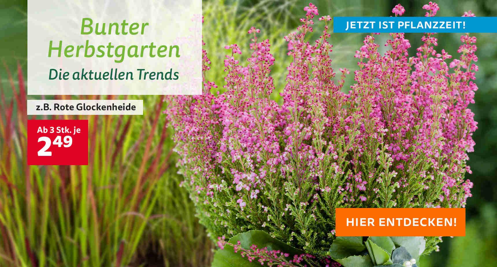+++ (3) Bunter Herbstgarten +++ - 3