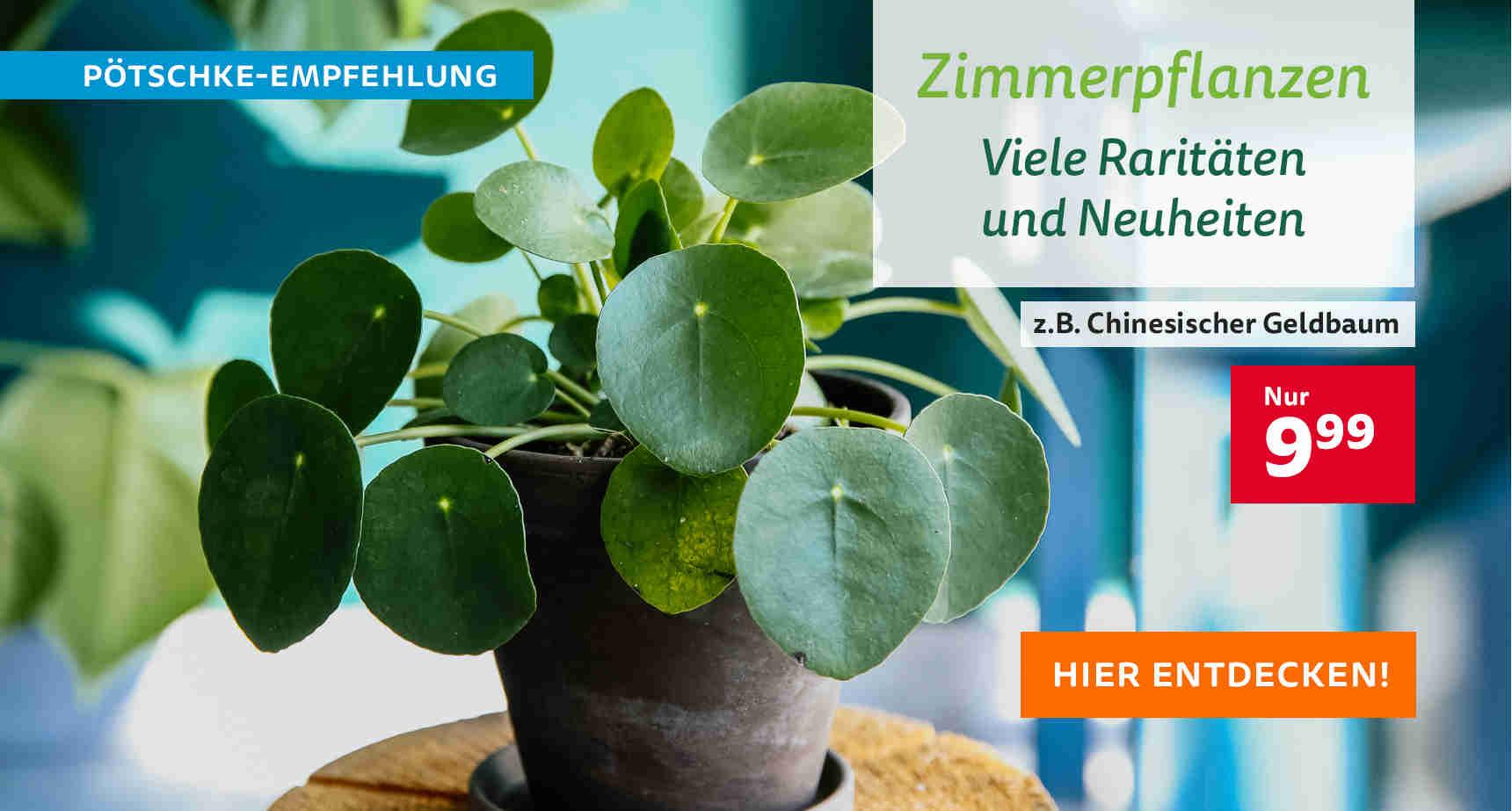 +++ (2) Zimmerpflanzen +++ - 3